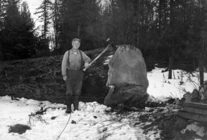 "View of Martin Saarela (faller) standing next to tree. Lived on Bose Road east of the Bose Farm. Tree felled on Bose Farm, 74"" in diameter. pre-1960"