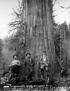 Loggers stand in front of large cedar tree near the Duckabush River. pre-1930